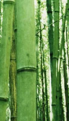 bambusfibre